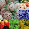 D191Pack Rare Delicious Strawberry Seeds Vegetables Fruits Seeds New