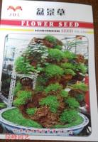Balcony bonsai grass seed flower seeds rockery grass seed bonsai grass seed 100