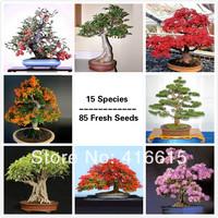 Premium Bonsai Package - 15 Species - 85 Fresh Seeds,Excellent Bonsai Subject PLUS MYSTERIOUS GIFT