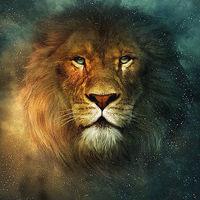 Original High-quality animal Oil Painting on Canvas Lionhead 24x36inch