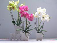 2 basin artificial flower set high artificial orchid bonsai artificial flower decoration flower silk flower