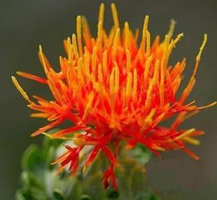Mix Mini $5 Flower seeds saffron flower balcony bonsai vegetables seeds bonsai herbal four seasons Free shipping(China (Mainland))