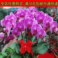 Mix Mini $5 Bonsai flowers seeds balcony orchid seeds four seasons 10  Free shipping