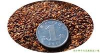High quality maca seeds., 15piece, enhance sexual function, fatigue resistance, medicinal herbs seeds