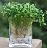 15cm Glass Cube Vase Home Decor Flower Wedding Vase Decoratives