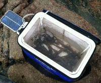 Solar Water Pond Oxygenator Air Pump Oxygen Pool fishpond fish tank