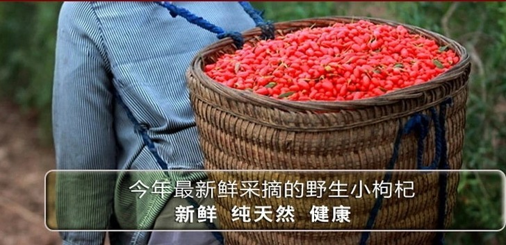 pure goji goji berry suppliers goji berries shipping Chinese Zhongning Ningxia Herbal Tea wild and medlar