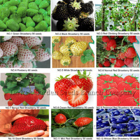 KINDS OF DIFFERENT STRABERRY SEEDS (GREEN, WHITE, BLACK, RED, BLUE, GIANT, MINI, BONSAI, NORMAL RED, PINEBERRY STRAWBERRY)
