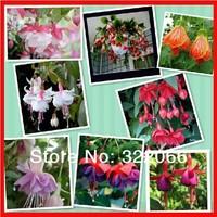 free shipping 50pcs/lot  factory wholesale Begonia seed Fuchsia, fuchsia seed, crabapple, lantern flowers, potted indoor balcony
