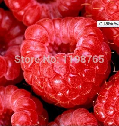 100% High Quality Raspberry Seed 100pcs Super Big Raspberry Seeds Fruit Seeds flower pots Strawberry bonsai Blackberry(China (Mainland))