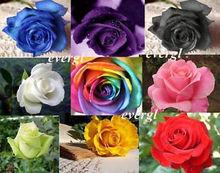 rainbow rose reviews