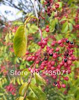 Organic Zanthoxylum Simulans 240 Seeds Szechuan Sichuan Pepper Herb Shrub Bulk Seeds
