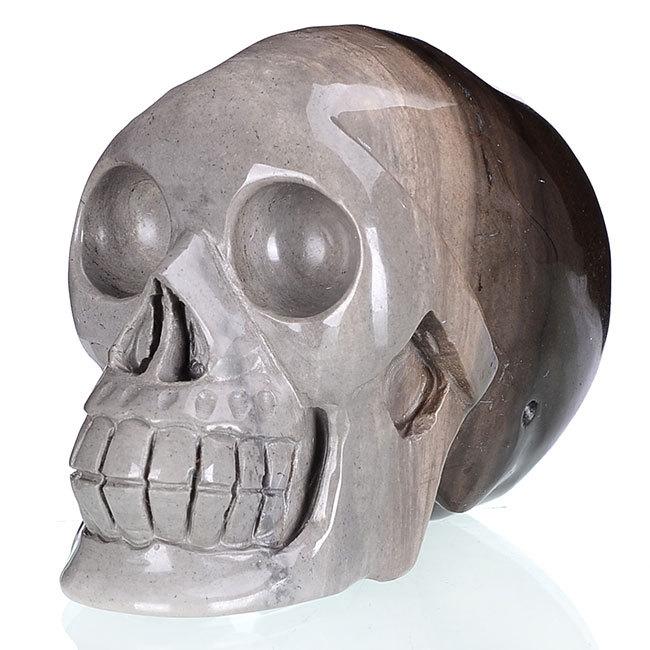 5 «естественный серый fossile череп резьба