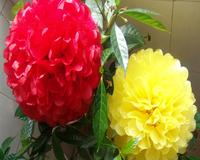 "500 pcs 30 Colors 10"" 25CM Pom Poms Ball Tissue Paper Pom Poms Flower Balls DIY-Weddings- Birthday-home Decorations-Baby Shower-"