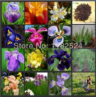 100 SEEDS - Mix-color Flag Iris Seeds - Bonsai Butterfly Phalaenopsis amabilis Flower plant seeds* Free Shipping