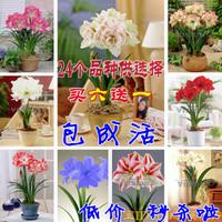 Белый чай Yunzhixiang ,  . ,  50