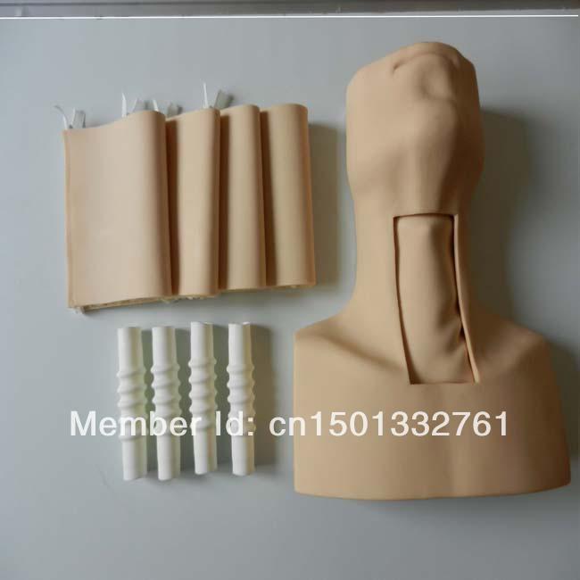 HOT SALES tracheostomy simulator(China (Mainland))