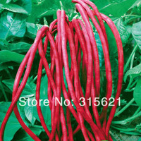 Red Bean Seeds Cowpea Length 30cm DIY Home Garden Health Vegetable 60pcs Free Shipping