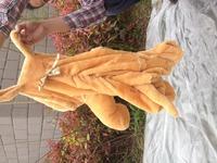 60cm Shar Pei shipping wholesale doll, plush dolls skin, large animal hull jackets, teddy bear skin coat