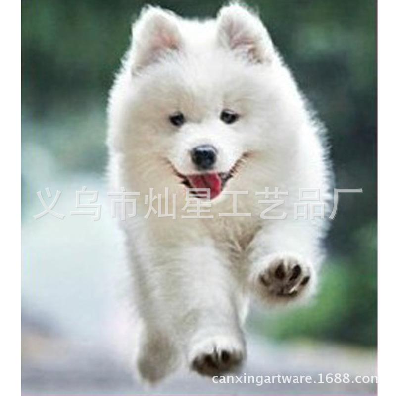 Free shipping Wholesale diy diamond painting embroidery cross stitch kits square Inlaid decorative dog running Patricia(China (Mainland))