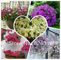 100pcs/lot original packaging multicolored hanging petunia seeds, Petumia hybrida seeds, garden windowsill Balcony seeds