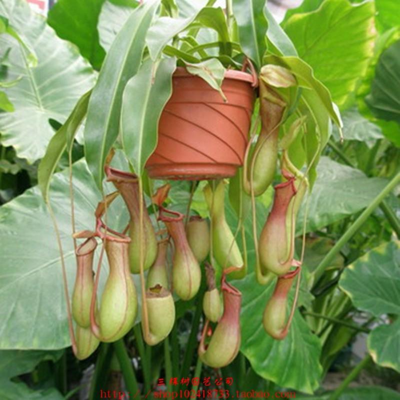 Online kopen Wholesale slaapkamer planten uit China slaapkamer planten ...