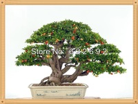 Upscale Indoor Plants, Need Fruit Potted, Taiwan Mini Pearl Cherry Seeds 30 Piece