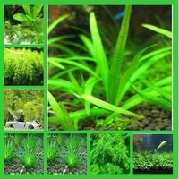 Free shipping Hot selling 3000pcs aquarium grass seeds (mix) water aquatic plant seeds (11 kinds) family easy plant seeds