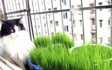 cat grass seed promotion
