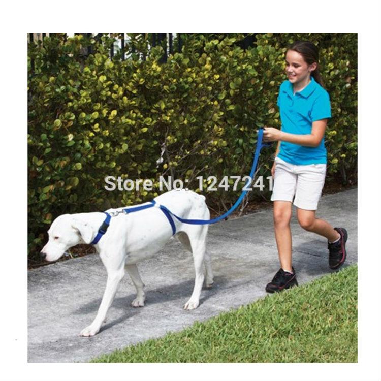 Ошейники и Поводки для собак Dog leash