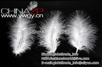 Factory Wholesale and Retail 50pcs/lot/bag Cheap White Turkey Marabou Feathers