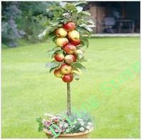 Free Shiping Bonsai Apple Tree Seeds (20 Pieces per bag)