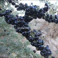 Super Grade Black Goji Berries 100g,Organic black Wolfberry,Chinese Lycii Herbal Tea,Free shipping
