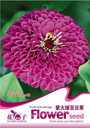 Zinnia Elegans Seedlings Garden Hibiscus Promot...