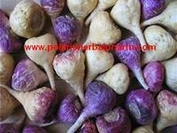 herbal extract powders Maca sexual extract powders 100:1