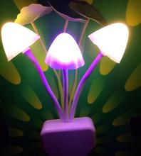 light regulator promotion