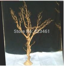 popular real christmas tree