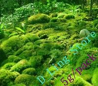 (5+gram ) Moss spores/Moss Grass Seeds(Plantes aquatiques) for Home Yard Garden bonsai Decoration
