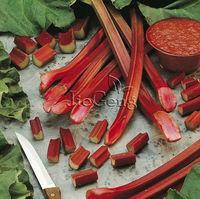 Rhubarb Victoria Seed * 1 Gram ( 60 Seed ) * Rheum x hybridum * Hardy Perennial Garden Seed * Free Shipping