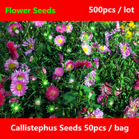 Widely Cultivated Callistephus Seeds For Planting 500pcs, Beautifying Flower Seeds, Blooming Plants Callistephus Chinensis Seeds