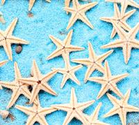 wholesale100pcs/lot shinee kpop kawaii resin Plant mushrooms garden decoration DIY craft Natural sea star