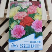 Carnation (Mixed) Seeds * 1 Pack ( 30 Seeds ) * Dianthus caryophyllus * Flower Seeds * Plant seeds