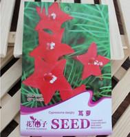 10pcs/bag cypressvine starglry flower seeds DIY home garden free shipping