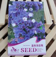 1 Pack 30 Seed Sea Lavender Limonium Sinensis Myosotis Flower seed