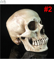 Free shipping new Study samples model human skull Medical Resin mask Adult head Skeleton Replica Handmade Resin prop Collection