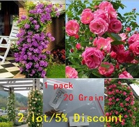 10 kinds/lot China Climbing Rose Seeds, 1 kind 20 pcs, total 200 pcs,  20 kinds of styles climbing rose Seed  ZZ300