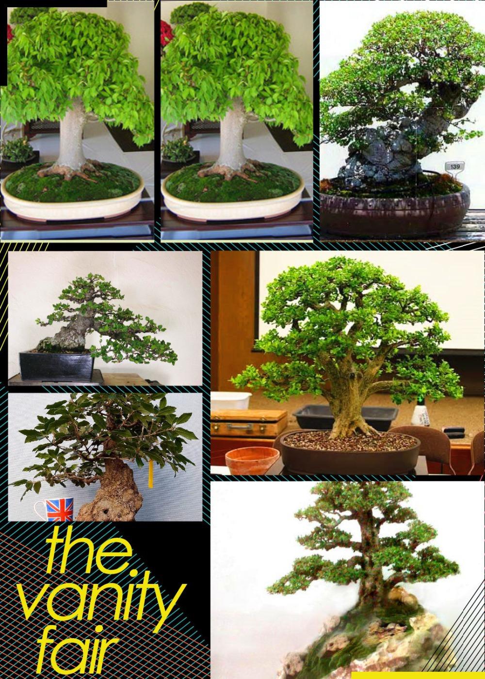 Выращивание дерева бонсай: клен, сакура из семян в домашних 97