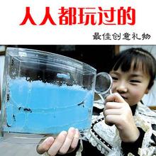 wholesale ants toy