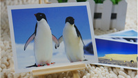 Free shipping  The world of animals - penguin/card every six animals postcard