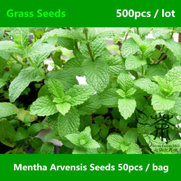 Mentha Arvensis Plants Novel Plant Mentha Arvensis